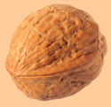 Walnuts of Chile